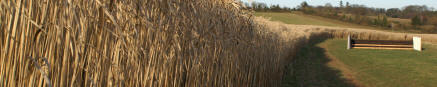 Fennington Miscanthus Horse Bale (LOCAL DELIVERY/PICK UP ONLY)